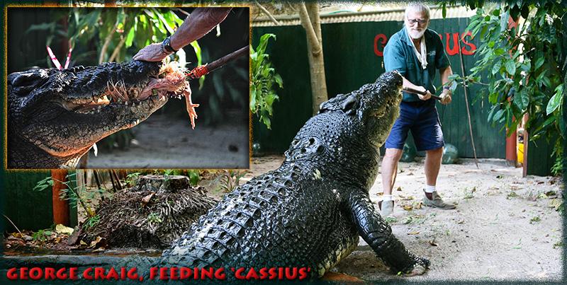 Marineland Melanesia Cassius